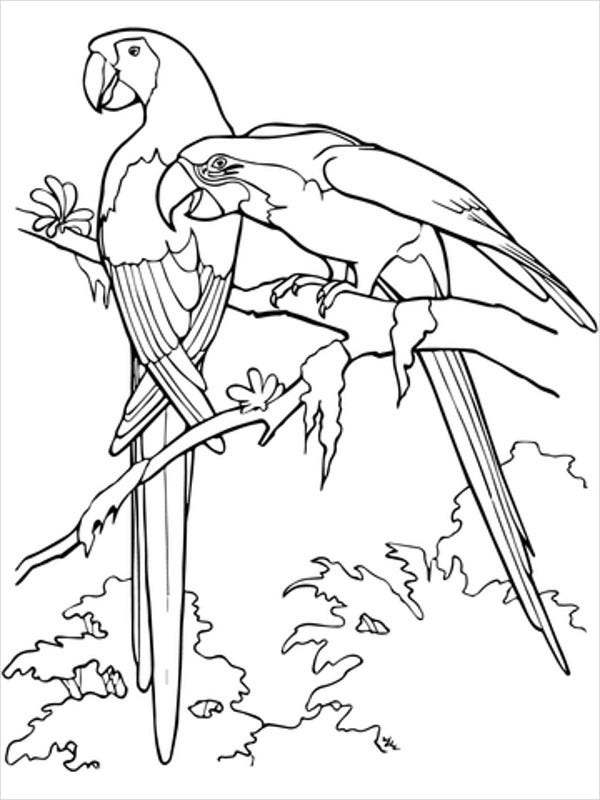 bird coloring pages for adult
