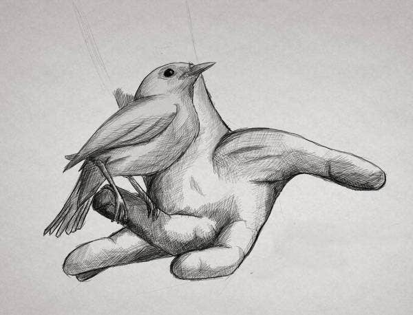 bird-pencil-drawing