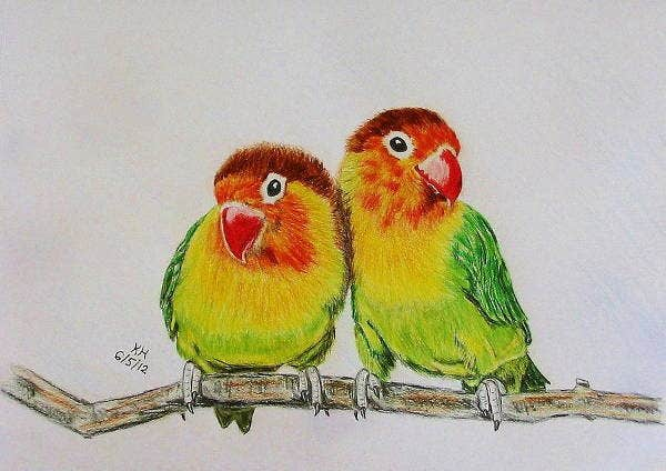 love-bird-drawing