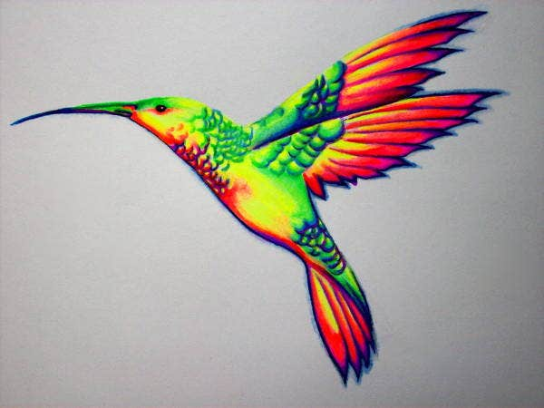 humming-bird-drawing