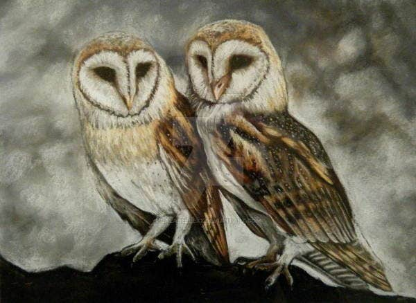 owl-pastel-drawing
