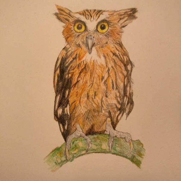cool-owl-drawing