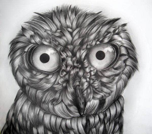 black-and-white-owl-drawing