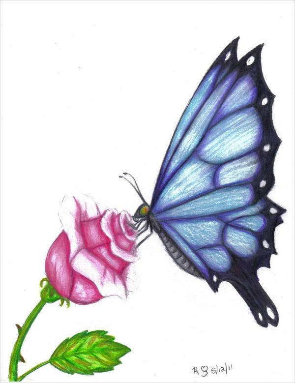 butterfly rose drawing