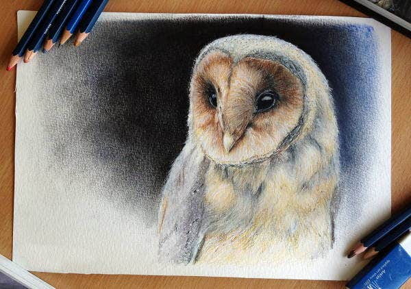 owl-face-drawing