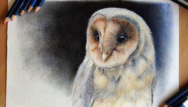owldrawings