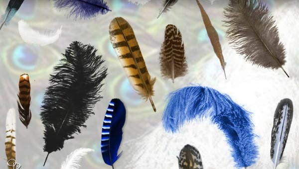 featherbrushes