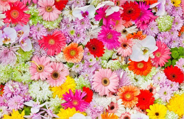 Colorful Flowers Background