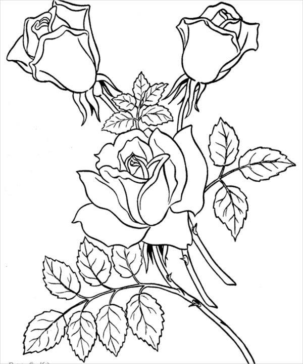 Valentine'S Day Rose Colouring Page