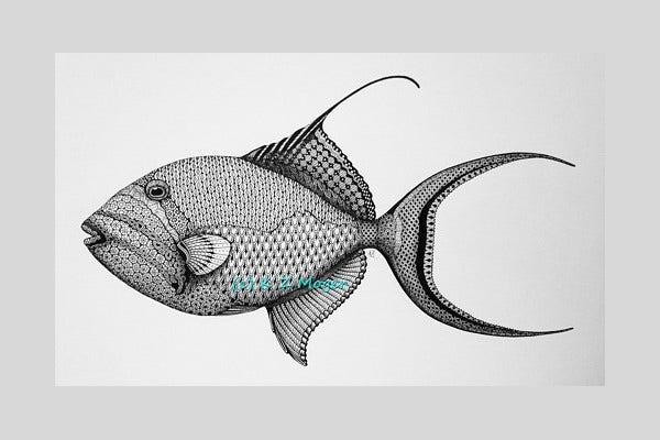 Trigger Fish Drawing