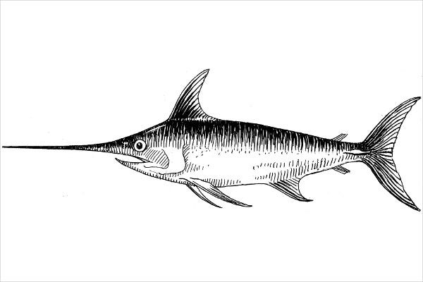 Swordfish Photo Drawing