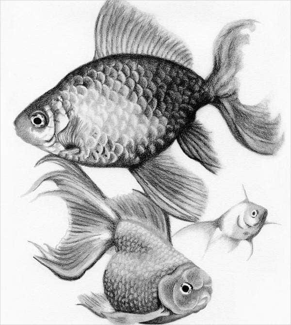 Fish Pencil Drawing