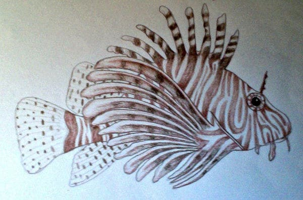Colour Drawing Fish