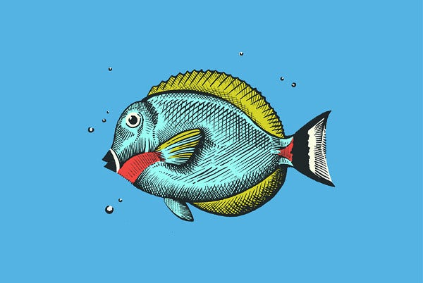 Colorful Fish Drawing