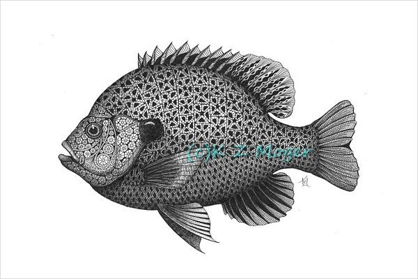 Bluegill Sunfish Drawing