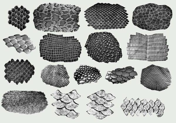 snake scale brush photoshop