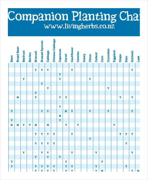Companion Planting Chart   Free Excel Pdf Documents Download