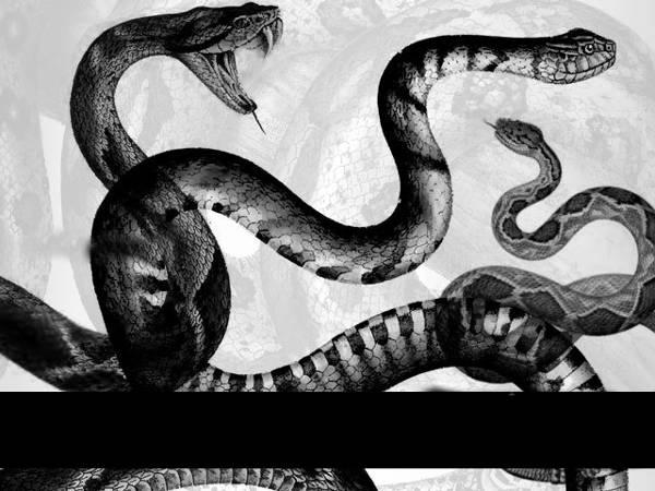 reptile snake brushes