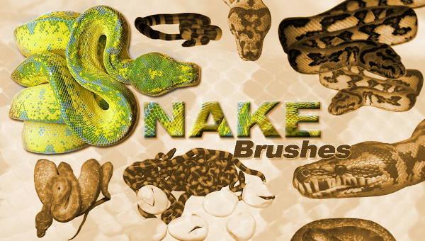 snakebrushes