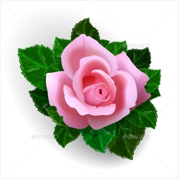 rose-flower-vector