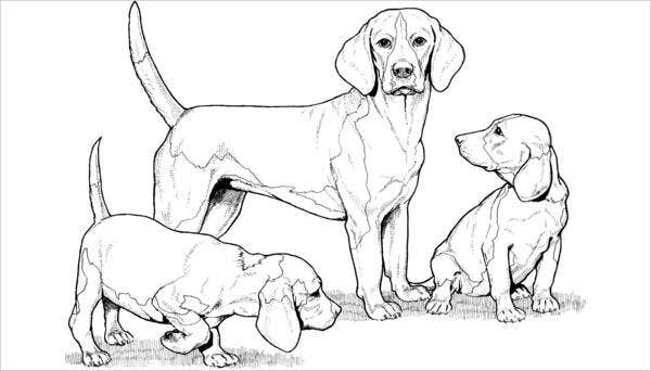 dog-breed-coloring-page