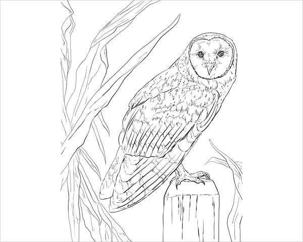 barn-owl-coloring-page