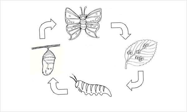 butterfly-life-cycle-coloring-page