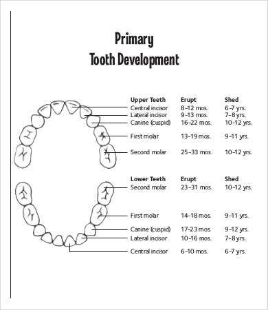 primary baby teething chart