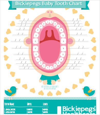 baby teething age chart