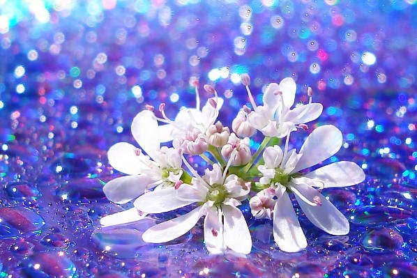 bokeh-flower-photography