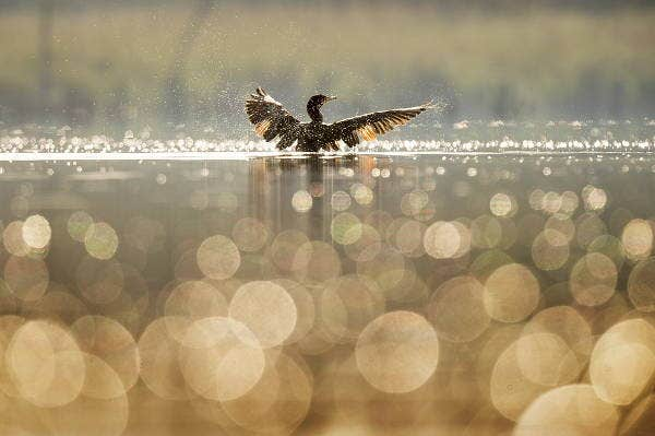 bokeh bird photography