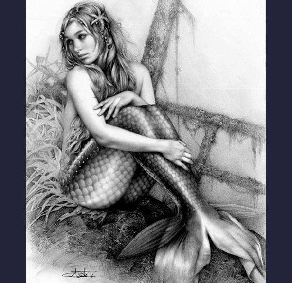 Charcoal Mermaid Drawing