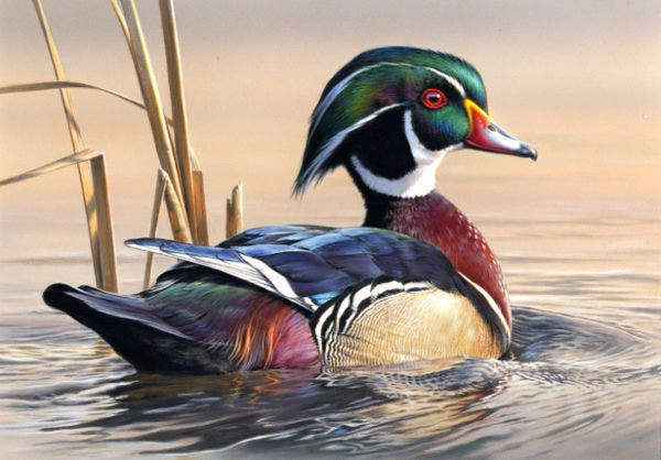 acrylic painting of duck