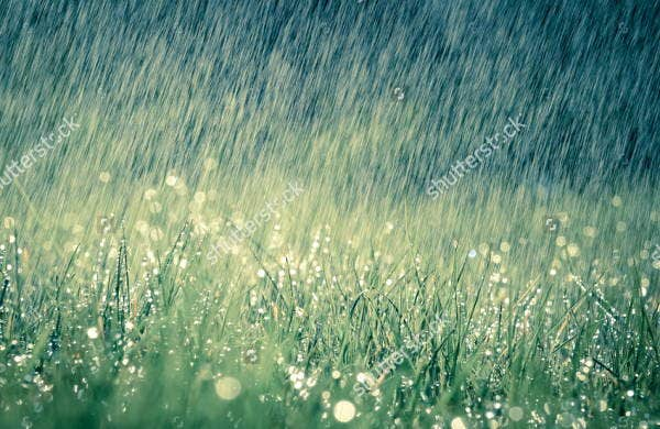 nature rain photography