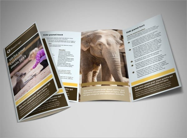 Zoo Animal Brochure