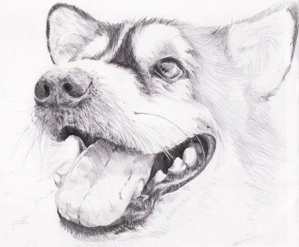 Sketch Drawing of Animal