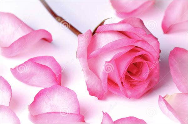 rose-petal-photography