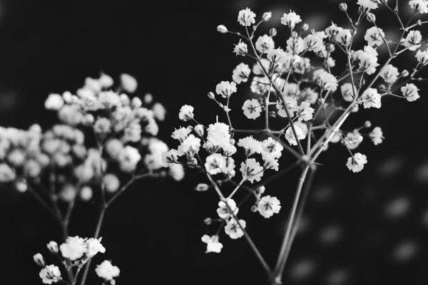 black and white flower photography