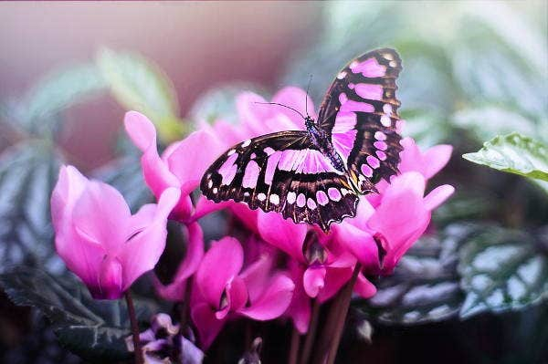 butterfly flower photography