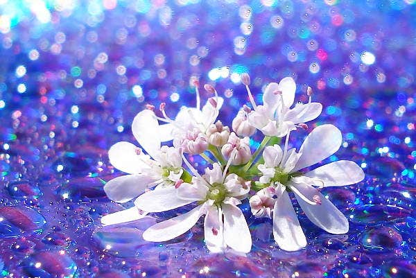 flower-bokeh-photography