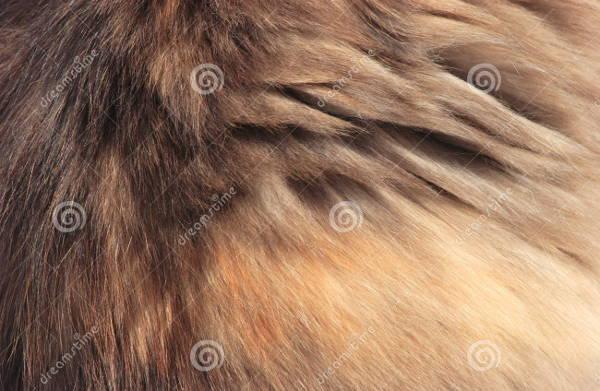 soft-fur-texture