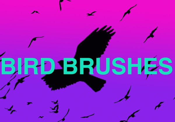 vector bird brushes