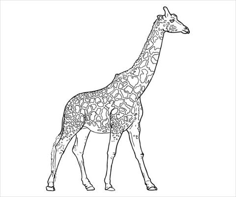 9 giraffe coloring pages  free psd pdf jpg format
