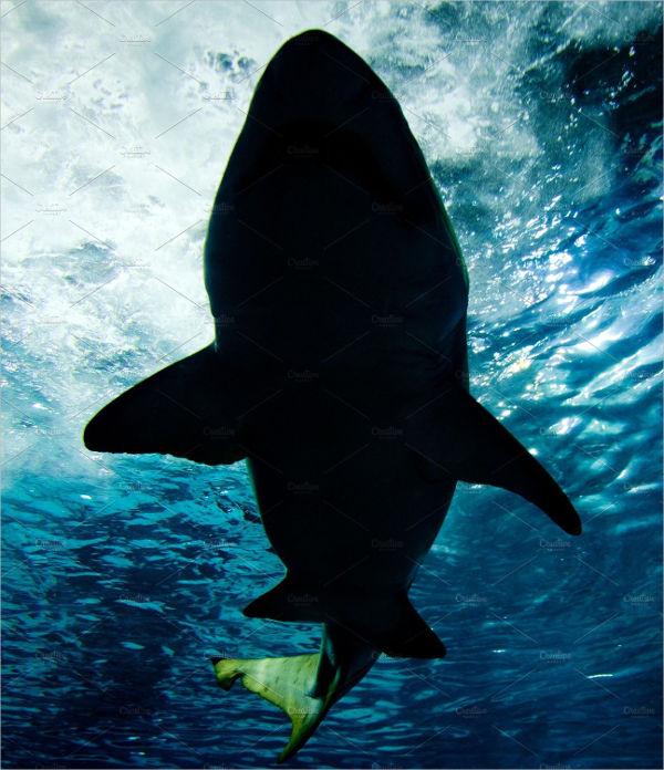shark-fin-silhouette