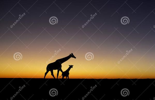 Sunset Giraffe Silhouette