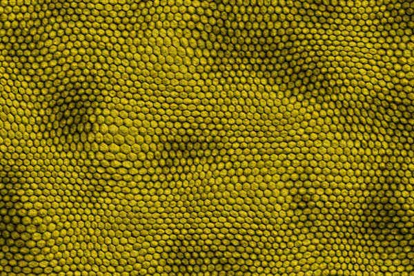 yellow snake scale texture