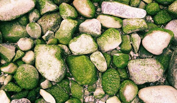 moss-rock-texture