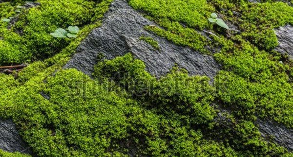 moss-stone-texture