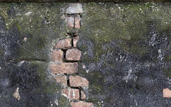 moss-wall-texture