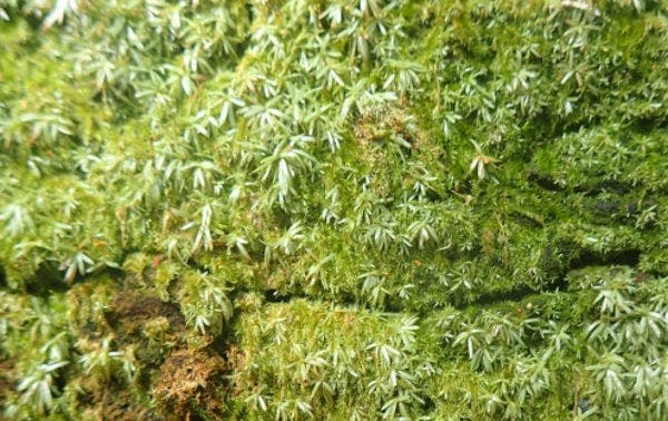free-moss-texture